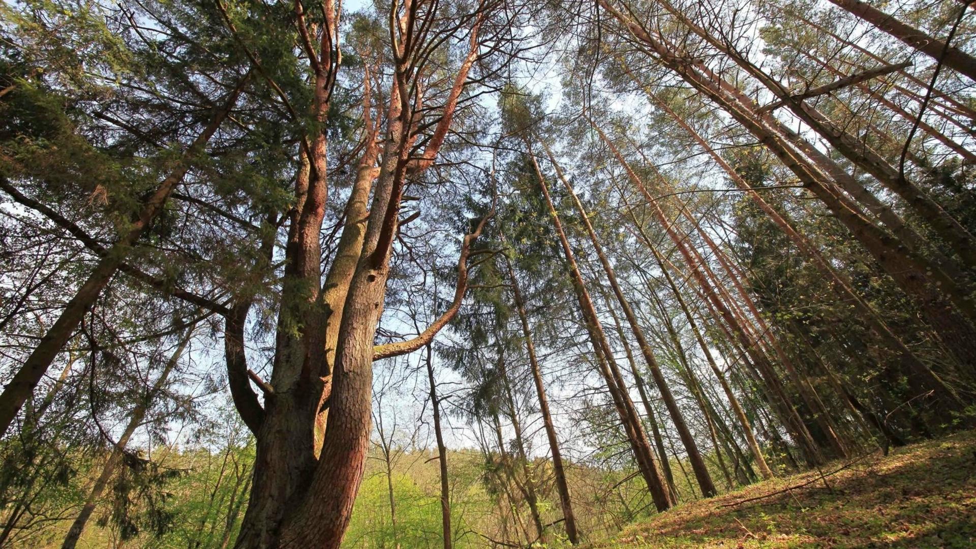 Dviračiais iki Medžių lajų tako