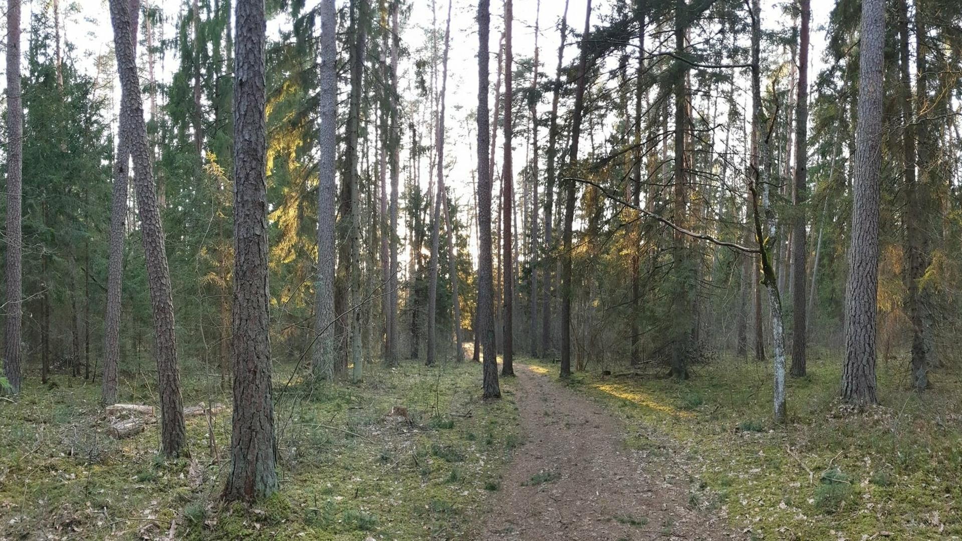 Voverės trasa